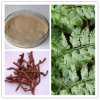 Drynariaの根茎のエキスの自然な反骨粗しょう症