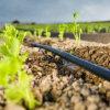 На заводе рекламных материалов сельскохозяйственной системы капельного орошения трубопровода