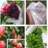 과일을%s PP Spundond 짠것이 아닌 직물 & 야채는 덮개 VA 127를 보호한다
