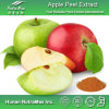 Выдержка корки 100% естественная Apple (полифенолы 50-90%, Phlorizin 95% 98%)