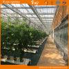 De mooie Serre van het Glas voor het Planten van Komkommer/Tomaten