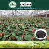Aumento microbico dell'agente del carbone di legna di bambù del fertilizzante di Kingeta produttivo