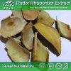 Выдержка Rhapontici корень 100% естественная (коэффициент: 4:1 ~20: 1)