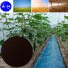 EDDHA Fe Organic Fertilizer Organic Agricultureのための6%