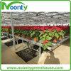 El equipo de efecto invernadero para el cultivo de hortalizas banqueta, Mesa de apoyo