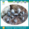 TCI inserta el botón de la explotación minera del carburo de tungsteno