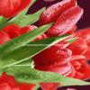 100%Polyester druckte dunkelrote Zerstreung der Tulpe-3D Gewebe für Bettwäsche-Set