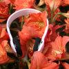 Bel écouteur bleu stéréo de dent de mode sans fil de casque