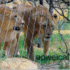 Защитная решетка льва тигра проволочного каната сетку каркаса