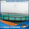 Gabbia netta dell'HDPE, pesciolini di tilapia che coltivano gabbia in lago Volta