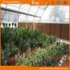Bello Multi-Span Film Greenhouse con Arch Structure per Agricultural Use