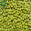 Feijões de Mung verdes baratos