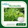 Мирицетин /CAS выдержки чая лозы выдержки завода высокой очищенности: 529-44-2