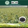 Il carbonio del fertilizzante dello scarificatore di Kingeta ha basato il fertilizzante organico biologico