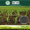 Kingeta registra il fertilizzante composto basato carbonio NPK 15-15-15 del terreno pH