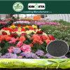 Il carbonio produttivo di aumento di Kingeta ha basato il fertilizzante composto NPK 18-18-6