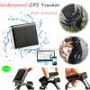 GPS de remplissage solaire suivant le dispositif pour les animaux (V26)