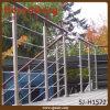 De openlucht Leuning van het Roestvrij staal van het Balkon in het Traliewerk van de Staaf (sj-H1572)