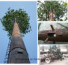 Einzelnes Rohr getarnter Baum-Antennenmast