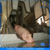 Оборудование убоя свиньи с конструкцией хладобойни
