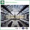 Serra del vetro float per il ristorante ecologico