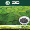 Il carbonio di Kingeta ha basato la resistenza di malattia del fertilizzante organico
