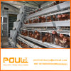 الصين ينفصل دواجن آليّة قفص مع آليّة يغذّي يشرب بيضة تجميع نظامة
