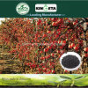 Il carbonio produttivo di aumento di Kingeta ha basato il fertilizzante organico biologico