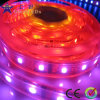Tira de LED RGB direccionable (GRFT1000-60RGBD)