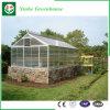 Invernadero de cristal de la estructura de Venlo de la alta calidad para la venta
