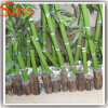 Quase Artificial Verde Natural Árvore de bambu da sorte