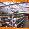 폴리탄산염 장 다중 경간 Venlo 널리 이용되는 유형 온실