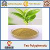 Polifenoli naturali dell'estratto 40% del tè del fornitore 100% Java della fabbrica di GMP