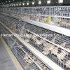 Het Landbouwbedrijf van het gevogelte Weinig Kooi van de Kip (galvanisatie)