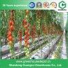 Serre chaude de tomate de qualité avec le crochet s'arrêtant de centrale en vente