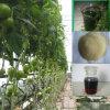 Pó do ácido aminado da fonte 70% da planta