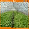 식물성 설치를 위한 널리 이용되는 굴렁쇠 온실