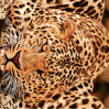 o leopardo Pigment&Disperse de 100%Polyester 3D imprimiu a tela para o jogo do fundamento