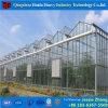 温室の電流を通された鉄骨フレームの温室のローズのガラス耕作