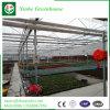 Solo invernadero barato de la agricultura de la película del palmo para el vehículo y el jardín