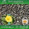 100% естественное - P.E. Verticillata Malva, L. Verticillata Malva, выдержка Malvae Semen