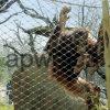 Engranzamento da corda de fio do aço inoxidável/fábrica animais da cerca