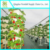 Sistema hidropónico de la alta agricultura dimensional del invernadero