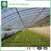 低価格のHydroponicレタスのための農業のフィルムの温室
