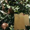 Schaden-Beweis-Antiinsekt-Wasser-Beweis-Papier-wachsender Beutel für Frucht