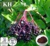 Sambucus nigra Elderberry extracto, extracto, Anthocyanidins 3% ~ 25%