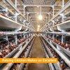 南アフリカ共和国の最もよい販売の鶏の卵の層のケージ