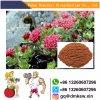 酸化防止剤CASのためのNootropicsの未加工粉Rhodiola Rosea: 97404-52-9