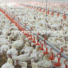 Set pieno Automatic Poultry Farm Equipment per Broiler