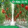 Высокое качество экономичных Span сельскохозяйственных выбросов парниковых газов из стекла с помощью сетки от насекомых для помидоры и огурцы и т.д. растительного происхождения